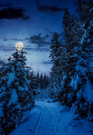 Photo pour path through spruce forest in winter. beautiful nature scenery with snowy trees at night in full moon light - image libre de droit