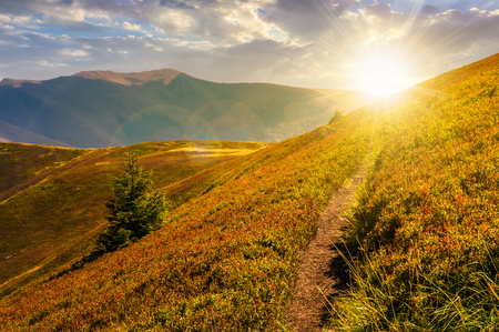 Photo pour path though mountain hills and ridge at sunset. beautiful scenery with spruce tree on a slope in fine weather on late summer day - image libre de droit