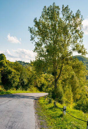 countryside road through forest in mountains. lovely transportation scenery in early autumn afternoon. vertical