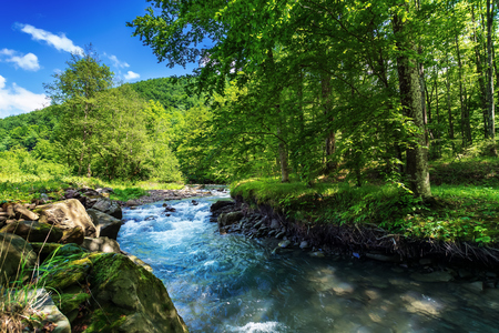 beautiful summer landscape by the small forest river. raging water flow among the rocks on the shore. fresh green foliage on the trees. forested hill in the distance. bright and warm afternoon