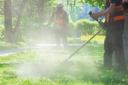 Foto per professional lawn mowing service in the park. two men working with brush cutter. dust and yellow dandelions thrown by nylon string - Immagine Royalty Free