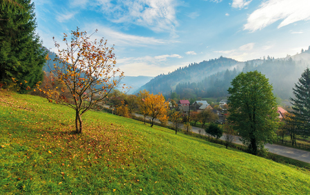 orchard on a grassy hill in the rural valley. trees in golden foliage. distant forest in fog. village near the road. beautiful autumn landscape in mountains. amazing sunny weather, blue sky with clouds