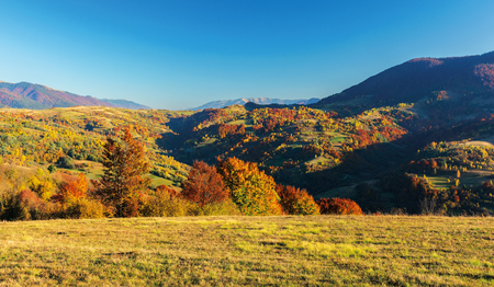 Foto de wonderful autumn afternoon in mountains. beautiful countryside landscape with trees in red foliage on rolling hills. rural area of carpathians. ridge in the distance. clear blue sky - Imagen libre de derechos