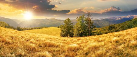 Photo pour beautiful panorama of mountain landscape at sunset in evening light. beech trees on the meadow with weathered grass. svydovets ridge in the distance. clouds on a blue sky - image libre de droit
