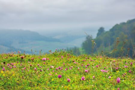 Photo pour grassy meadow with clover flowers. lovely countryside rural background. gloomy morning with overcast sky - image libre de droit
