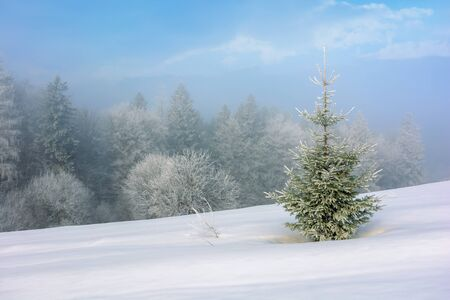 Photo for small fir tree on a snow covered slope. mysterious winter scenery in hazy weather conditions - Royalty Free Image