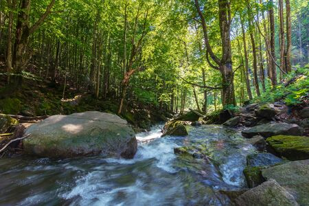Photo for beautiful landscape of rapid mountain river. flow among mossy rocks in the fores in springtime. warm sunny weather. trees in green foliage - Royalty Free Image