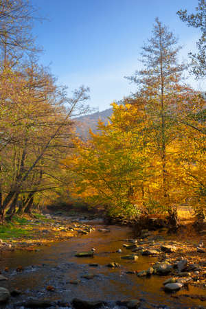 Photo pour river in the forest. water stream among the stones. yellow foliage in morning light. beautiful scenery in mountainous landscape - image libre de droit