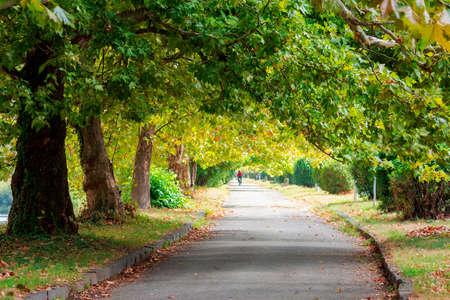 Foto de park alley in early autumn. trees in green foliage. sunny weather - Imagen libre de derechos
