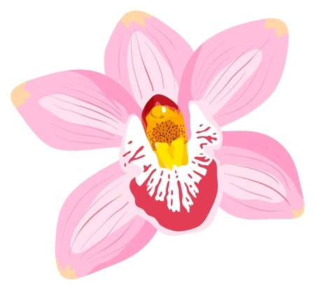Illustration pour The orchid is isolated on a white background - image libre de droit