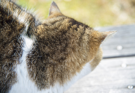 Old chubby cat look back and ignore photographer