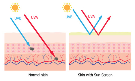 Illustration pour Infographic about sunscreen lotion protect human skin from UVA , UVB ray  sunscreen product - image libre de droit