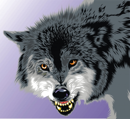 wolf with fangs on the gray background