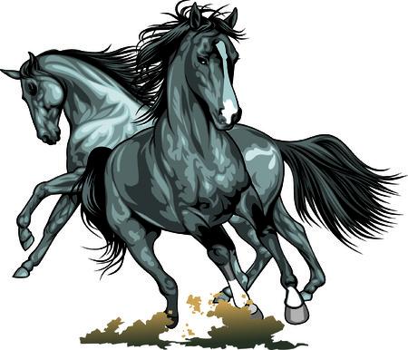 wild horses isolated on the white background