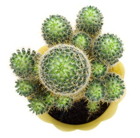 close-up green cactus, view from above, isolated on white