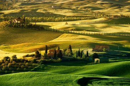 Golden Tuscan Landscape