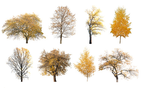 autumn trees isolated on white background