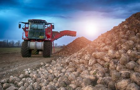 Foto für sugar beet harvesting machine - Lizenzfreies Bild
