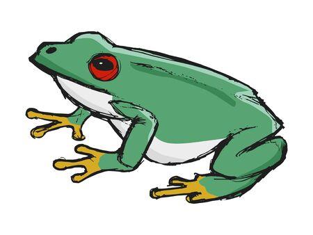 tree frog, illustration of wildlife, zoo, wildlife, animal of rainforest
