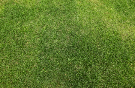 High resolution grass field texture