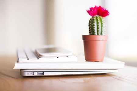 Closeup of cactus with flower placed on laptop, notepad, keyboard and smartphone