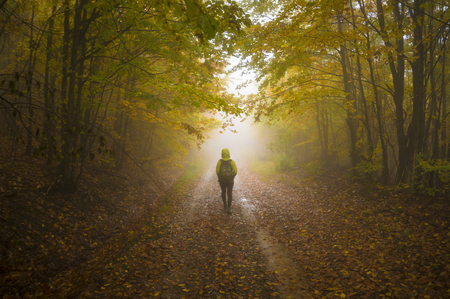 Photo for Dreamy autumnal forest path inviting you on a magical journey through the woods. - Royalty Free Image