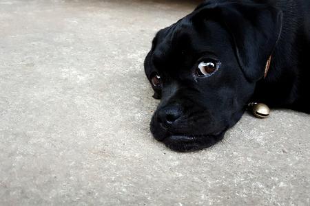a watching black dog