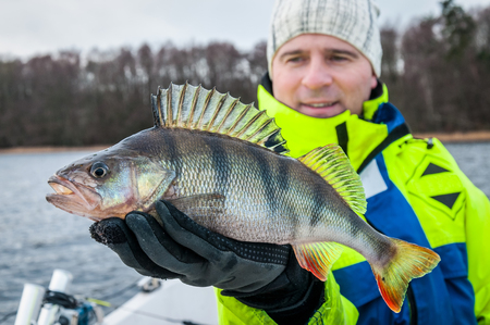 Photo pour Huge perch caught in winter season - image libre de droit