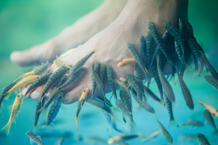Pedicure fish spa, Fish spa pedicure, Rufa Garra fish spa pedicure massage treatment, Closeup of feet and fish in water.