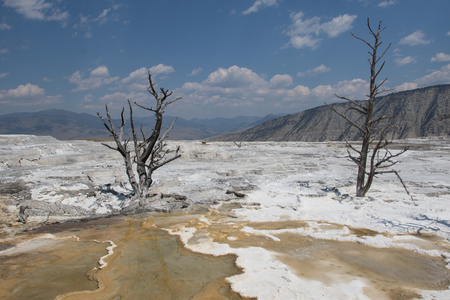 White Mammoth landscape with dead trees