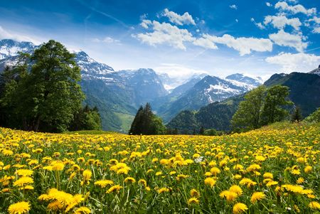 Photo pour Scenic view from Braunwald (Switzerland) with blossoming field of dandelions in spring. - image libre de droit