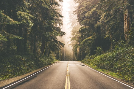 Foggy Straight Redwood Highway in Northern California, United States