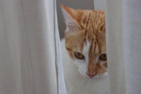 Photo pour cat looking hunting cute - image libre de droit