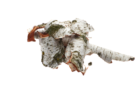 Foto de Birch bark on white isolated background - Imagen libre de derechos