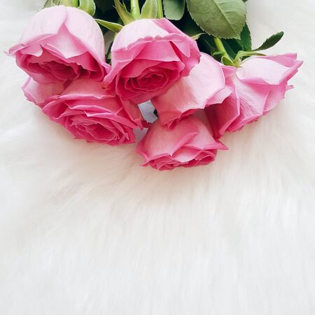 Bouquet of fresh pink roses on a sof white surface