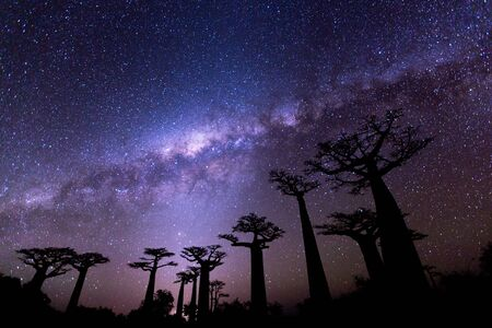 Photo for Milky Way at the Avenue of the baobabs - Royalty Free Image