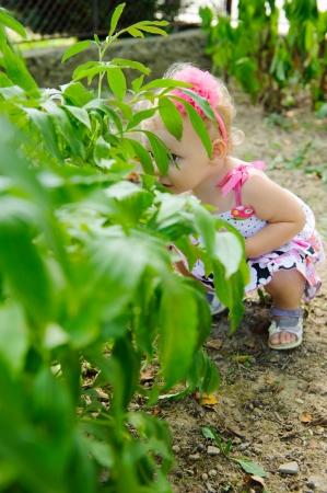 Little girl is hiding over the green bush