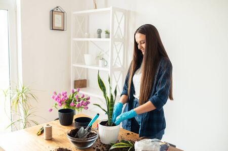 Photo pour Spring hobbies and lifestyle. A young cheerful woman is transplanting houseplants at home. - image libre de droit