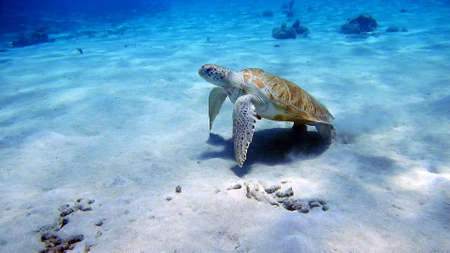 Photo pour curacao diving - image libre de droit