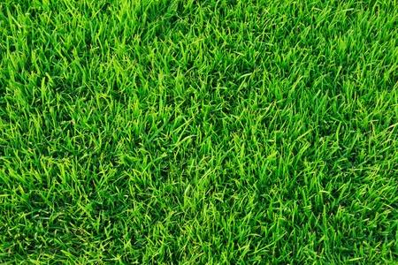 Photo pour Green grass texture - image libre de droit