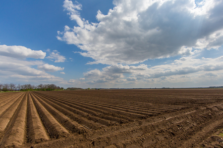 symmetrically furrowed natural farmland with blue sky and clouds