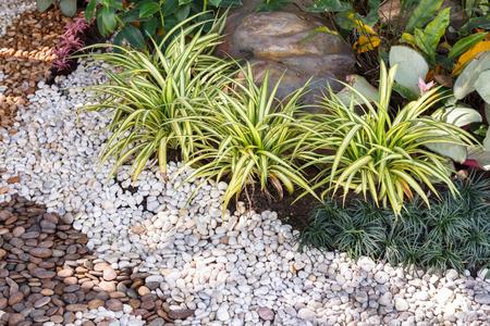 Photo pour Landscaping combinations of plant and grass. - image libre de droit