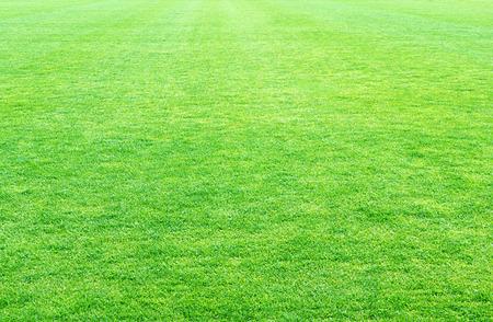 fresh spring green grass, green grass texture or background.