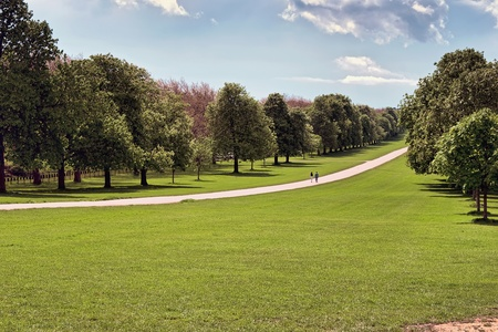The Long Walk at Windsor Great Park