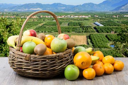 Photo pour fruit basket in crops with apples, bananas, oranges and tangerines - image libre de droit