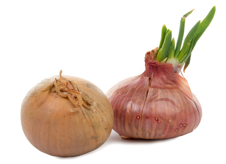 Photo pour onions With Their germs on white background - image libre de droit