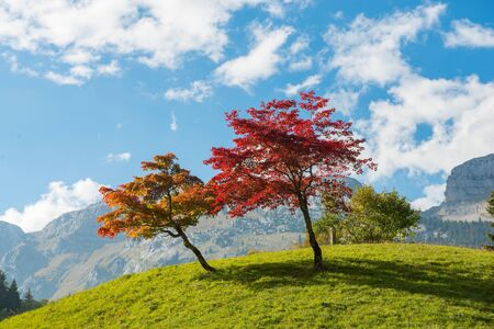 two trees with beautiful fall colorsの素材 [FY31053887813]
