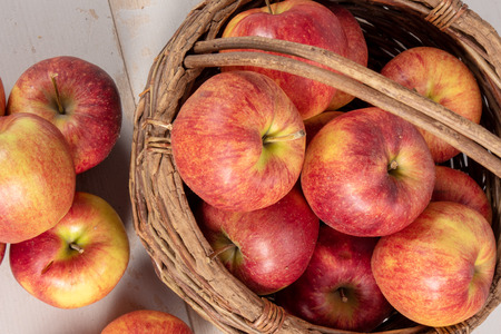 Photo for delicious red and yellow organic apples from Normandy - Royalty Free Image