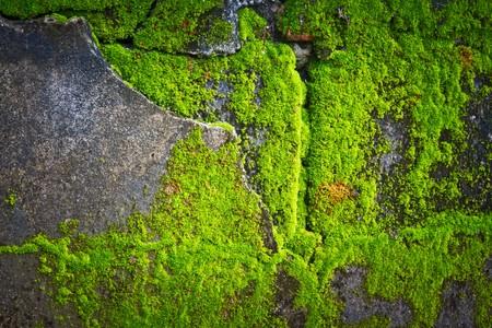 lichens texture