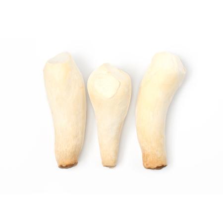 King Oyster mushroom (Eringi) on white backgroud.
